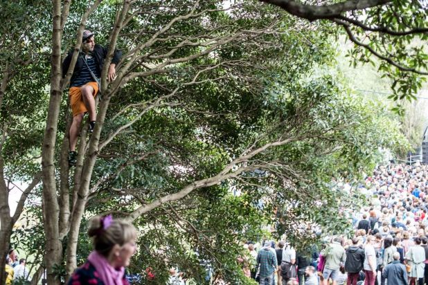 Fan climbing a tree to watch Alt-J.