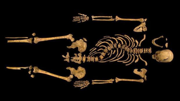 Remains found underneath a car park last September at the Grey Friars excavation in Leicester, which have been declared ...
