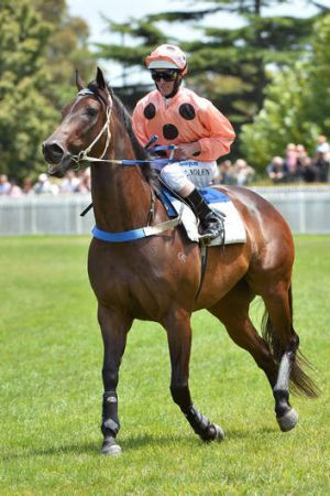 Luke Nolen riding Black Caviar at her recent exhibition gallop in between races at Caulfield Racecourse.