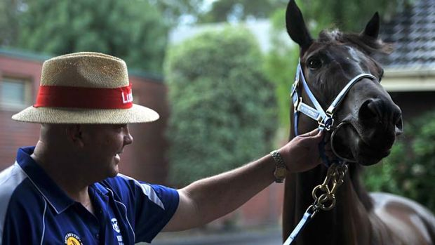 Class act: Black Caviar and trainer Peter Moody on Thursday, ahead of her return.