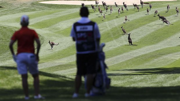 Karrie Webb of Australia waits for the kangaroos to clear the fairway during day one.
