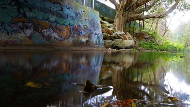 The Cooks River at Strathfield … the water, once popular with swimmers and patrolled by lifeguards, is ...