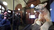 BERLIN, GERMANY - FEBRUARY 15:  Photographers take pictures of Knut the polar bear, featuring his original fur, on ...