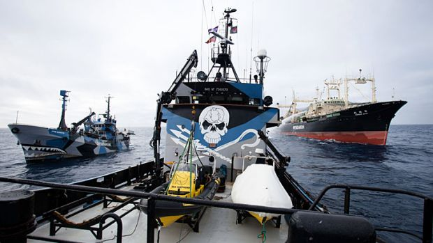 Last summer's whaling season was marked by several high seas collisions between Japanese and Sea Shepherd boats.