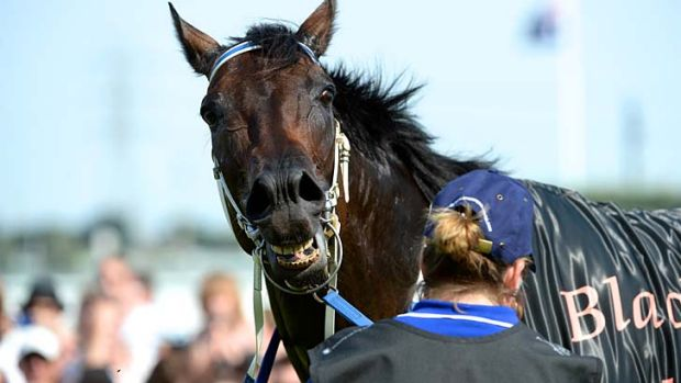 Inducted ... Black Caviar.