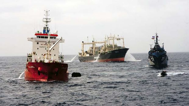 Stand-off ... the Steve Irwin, right, and the Nisshin Maru.