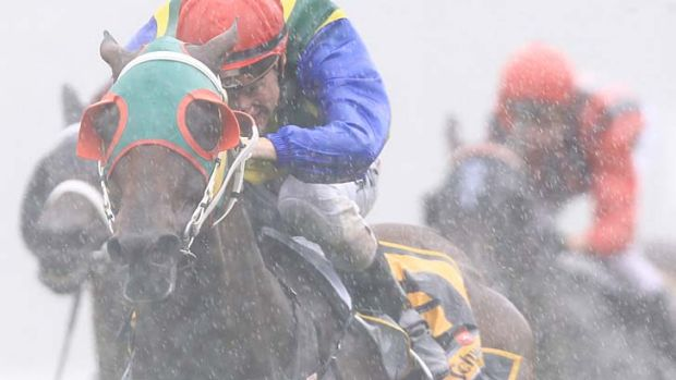 Reigning in the rain … Blake Shinn drives Alma's Fury to the line at Warwick Farm.