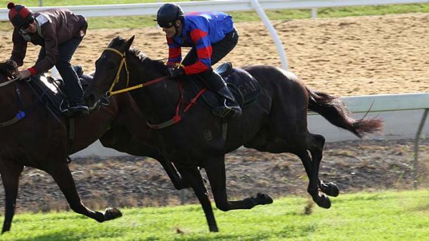 """We knew he wasn't going to be be able to go to Warwick Farm, so he had a good hit-out on the course proper"" ... Gai ..."
