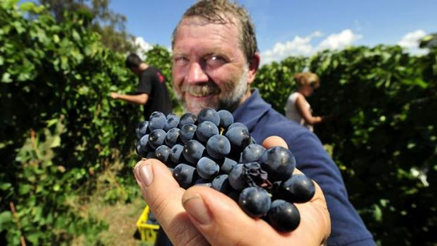 Allan Pankhurst, of Pankhurst Wines, says there's been just the right amount of sun and rain to make this year's crop a ...