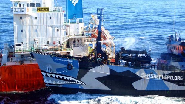 Sea Shepherd ship the Bob Barker collides with the Japanese whaling fleet fuel tanker the San Laurel.