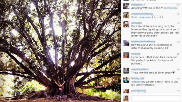 Lara Bingle posted a picture of herself in front of a Moreton Bay Fig at Kings Park on Instagram with the caption 'in ...