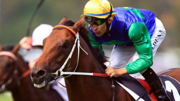 Headliner: All Too Hard is a short-priced favourite to win the Australian Guineas at Flemington on Saturday.