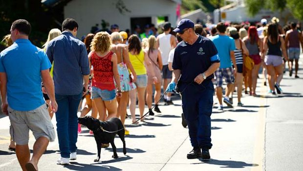 Police looking for illicit drugs at Future Music Festival use Passive Alert Detection (PAD) dogs to scan the  crowd.