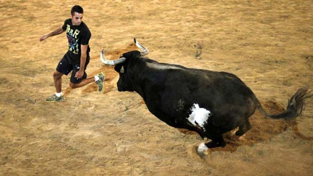 Most feared: Raton the bull in action.