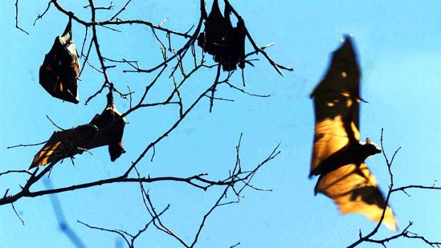 The problem of bats in urban areas is back in the spotlight.