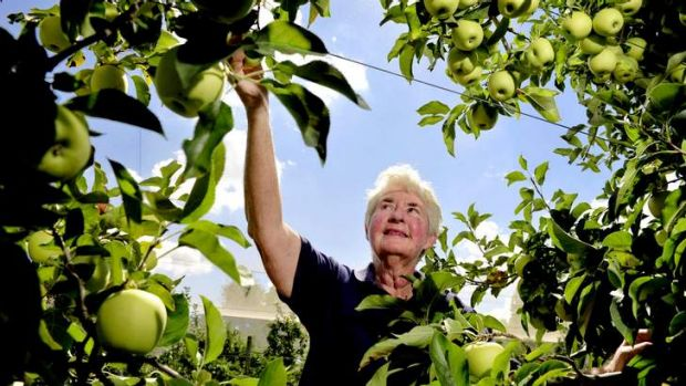 Fay Kerrison of Kerrison orchards of keeping up Pialligo's reputation as being a top producer.