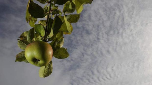 She'll be apples for Cider Australia if it blocks a proposed new tax.
