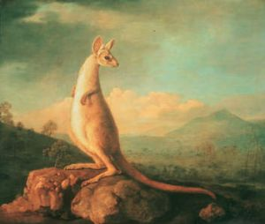A portrait of the Kongouro (Kangaroo) from New Holland, by George Stubbs