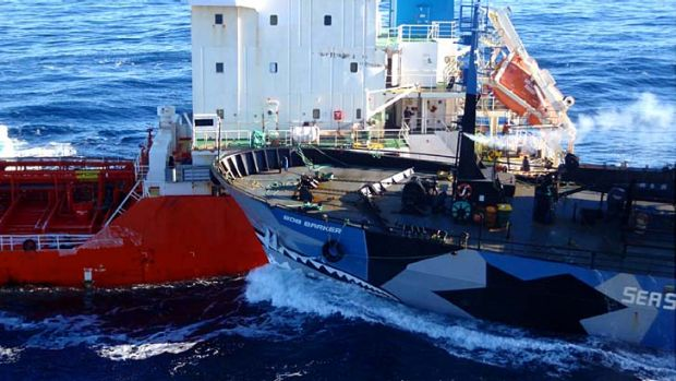 This year there were multiple collisions between activist and whaling ships.