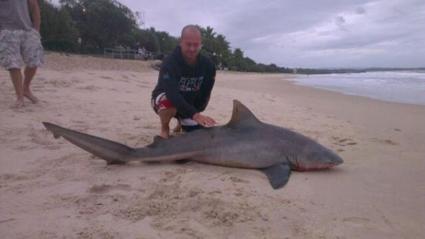 The shark carcass on Noosa Main Beach.