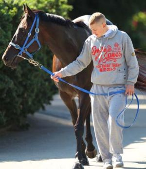 Black Caviar at the Moody stables in Rosehill.