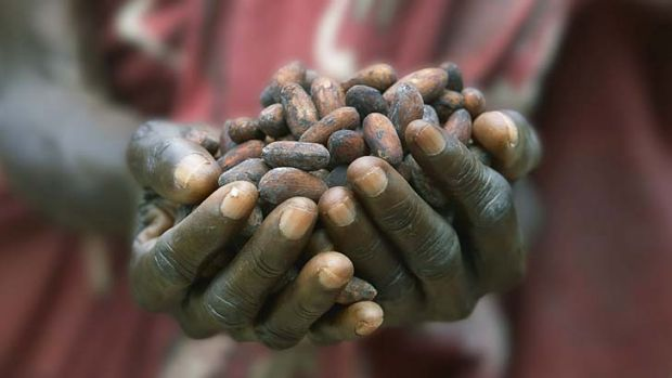 Fair trade: Cocoa beans being sorted in Ghana.