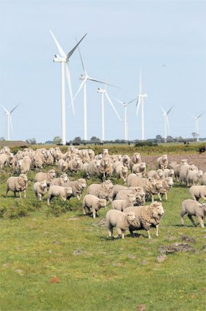 Forging a path: The $1 billion AGL Macarthur wind farm was unveiled this week.