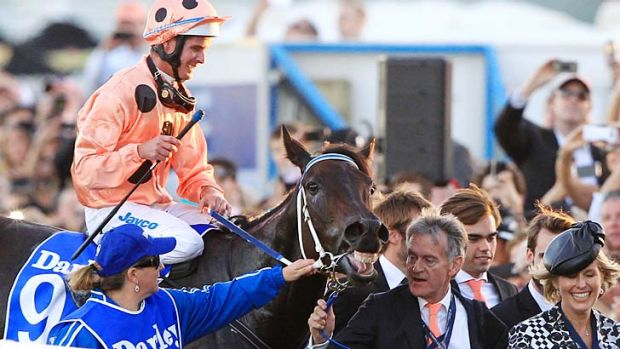 Winning grin: Black Caviar returns to scale at Randwick on Saturday.