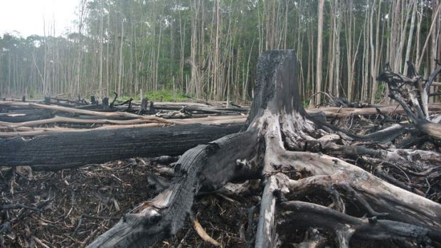 Commercial exploitation: Forests in Aceh are being cleared for mining.