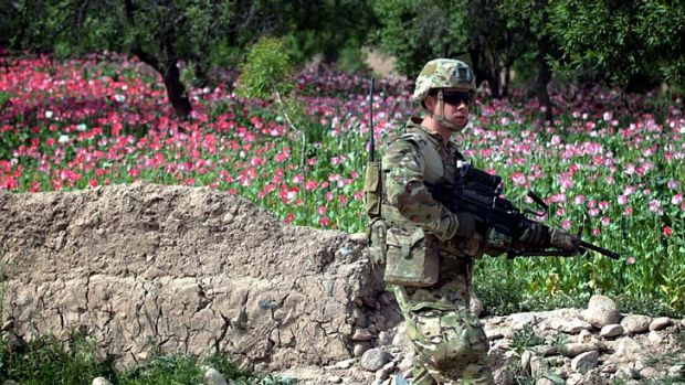 Danger zone: An Australian soldier inspecting a new road in the Oruzgan province on Tuesday.