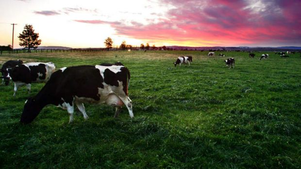 Say cheese ... the merged firms would produce 353,000 tonnes of dairy products.
