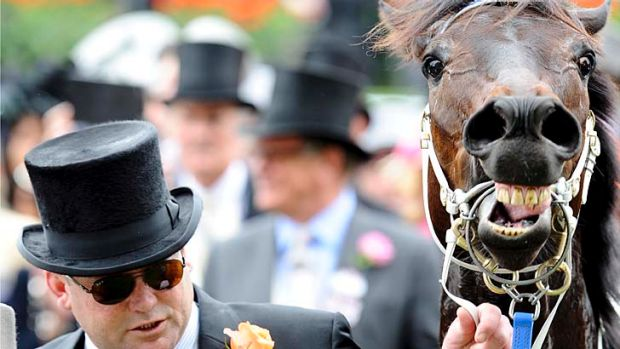 Trainer Peter Moody with Black Caviar after her win in the Diamond Jubilee Stakes at Royal Ascot.