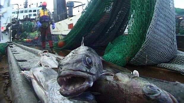 'White gold': The toothfish is eaten mostly in Japan, China and the United States.