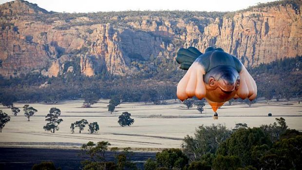 Something's afloat: The Centenary of Canberra has launched its largest commision, this sky whale hot-air balloon created ...