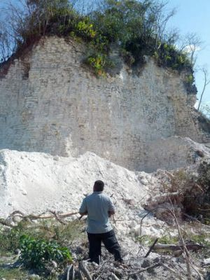 Jaime Awe, head of the Belize Institute of Archaeology, looks at the damaged sloping sides of the Nohmul complex, one of ...