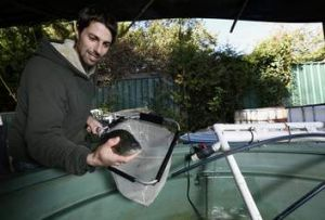 Simon Gemmell from Rivett checks the silver perch in his home aquaponic system.