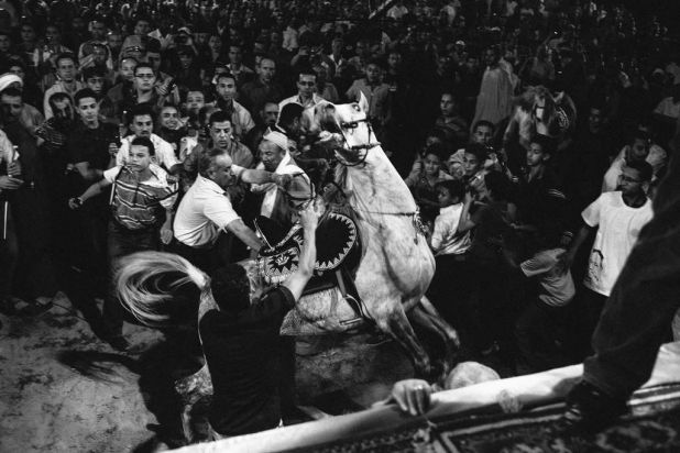 A horse bucks amongst a dense crowd during a campaign event for Egyptian Presidential candidate Amr Moussa, May 18, 2012.