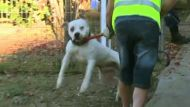 Jogger mauled by dogs (Video Thumbnail)