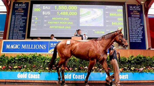 Nathan Tinkler's Nechita attracted a handsome bid.
