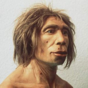 What a Neanderthal man may have looked like.