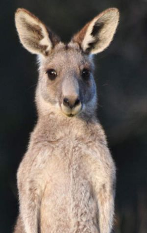 Protesters have won a bid to temporarily stave off a kangaroo cull.