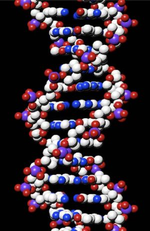 A generalised DNA structure.