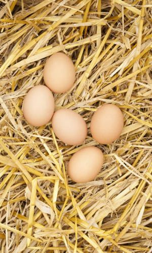 """Canberra restaurants that use raw eggs in their food are """"dicing with death"""" according to the ACT's chief health officer."""