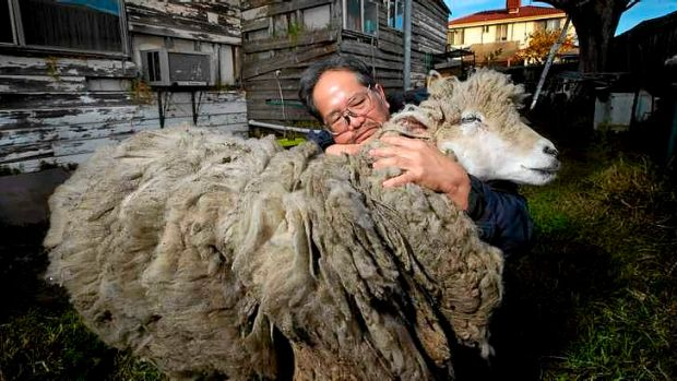 Vu Ho with Baa the sheep at home in Springvale.