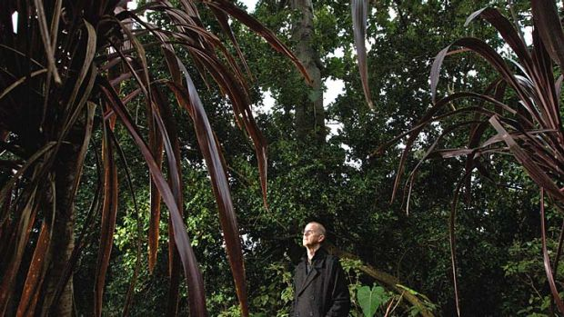 After a year's regeneration: Brett Summerell surrounded by many of the trees that have recovered after huge colonies of ...