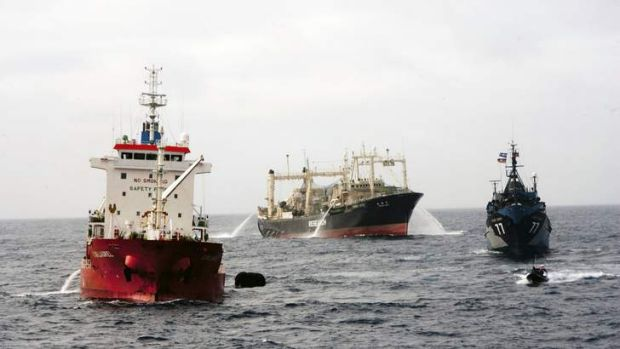 High stakes battle: Sea Shepherd ship Steve Irwin closes in on the Japanese research vessel Nisshin Maru earlier this year.