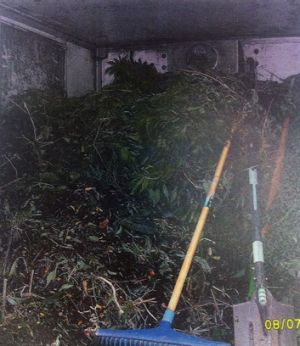 Police found almost 80 cannabis plants in the back of a truck.