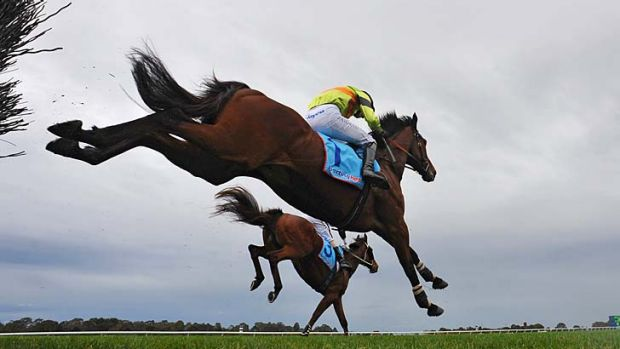 Giant leap: Bashboy (No.1) on his way to victory in the Crisp Steeple.