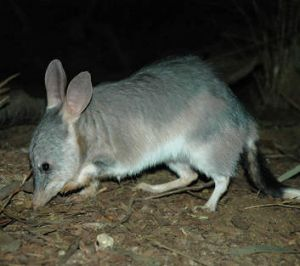 Kevin Rudd has asked for the Taronga Zoo bilby enclosure to be named after the new royal prince.