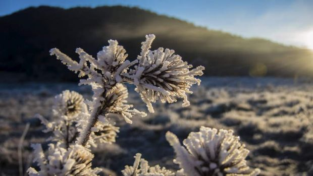 A frost photo at Rendezvous Creek in Namadgi National, submitted by Simon Williams for the Winter Photo Competition.